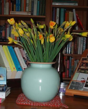 Tamar valley daffodils