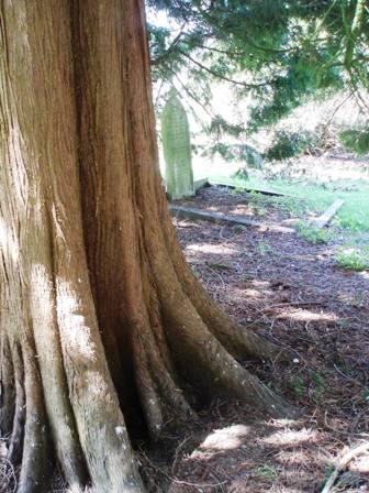 Dolvin rd treee