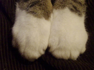 Rocky paws 2