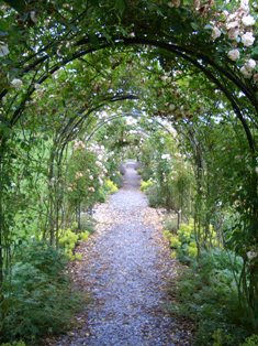 Endsleigh rose walk