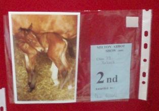 Vs 2 foal