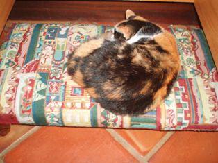Logs cat
