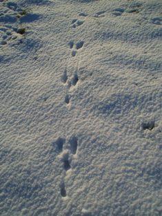 Snowpics rbbits