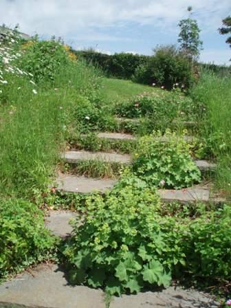 Garden 06-10 3