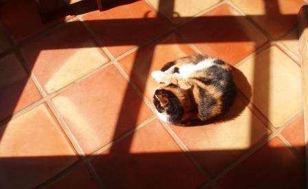Muffy sun 2