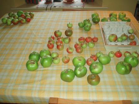 V show 2010  1 apples