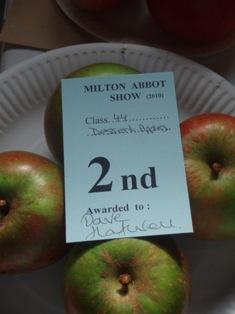 V show 2010 apples bh 2