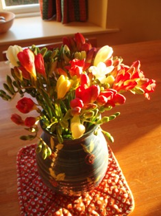 Freesias 1