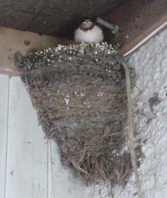 Ld nest 2