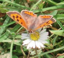 Tbi small copper