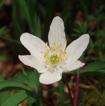 April wlk flower
