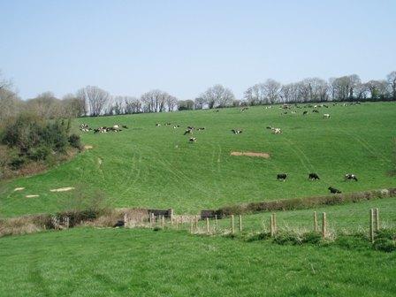 April wlk cows