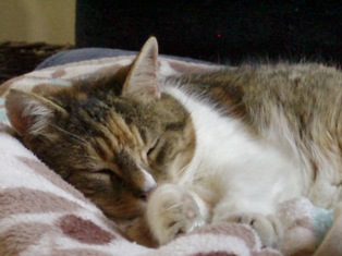 RW CAT 2