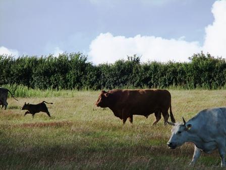 Test 9 bull
