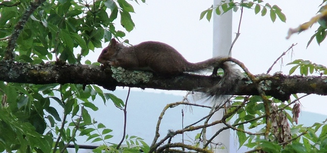 wise squirrel