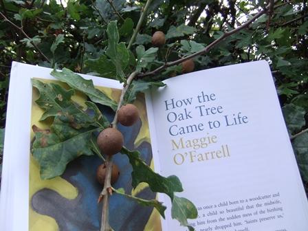 Wt  oak 2