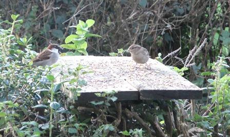 Bwyec birds 3