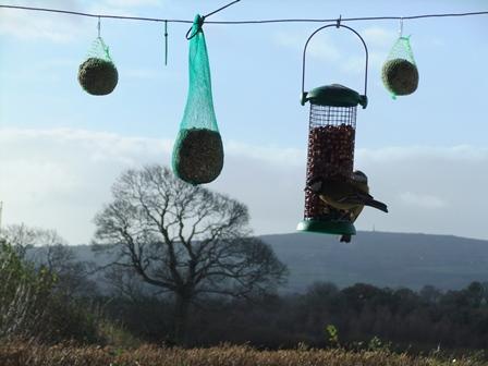 Bwyec birds 1