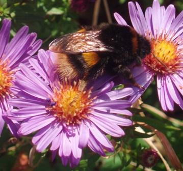 Thursday 17-9 bee