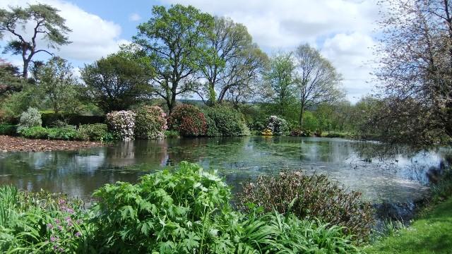 Cadhay stew pond