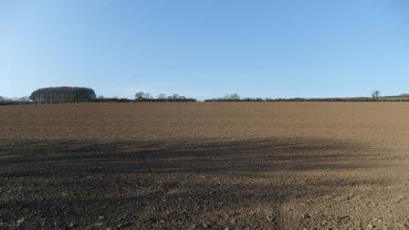 Harbs field