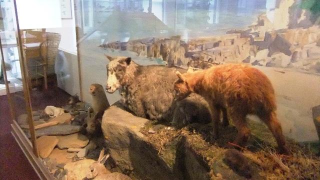 Orkney 2012 stromness + museum + animals