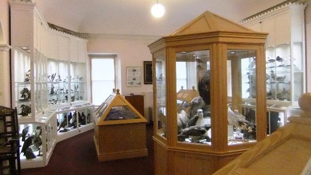 Orkney 2012 stromness + museum + birds