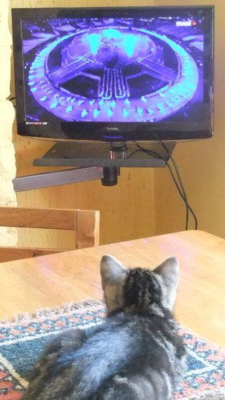 Magnus the Olympian cat