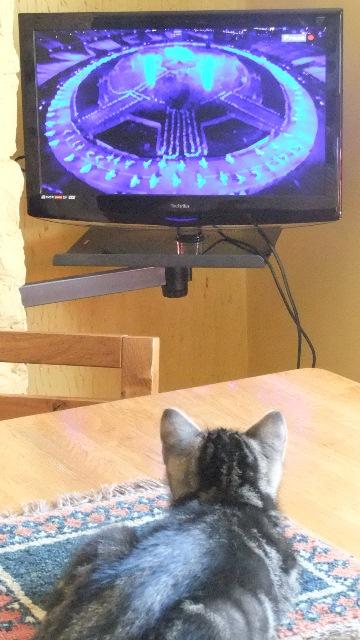Magnus 2 +tv