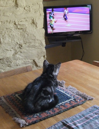 Magnus, the Olympic cat
