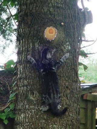 Magnus & the tree