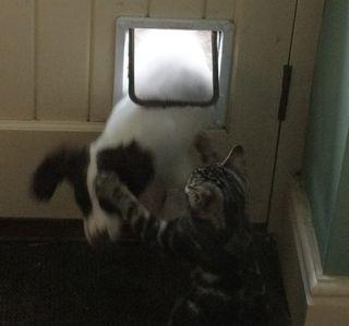 Cat Flap Wars