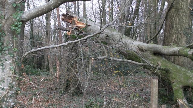 Lan storm tree