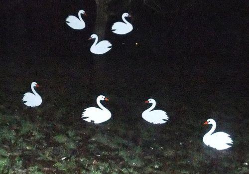 the Killerton House Christmas swans