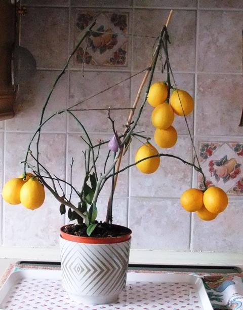 Lemons tree