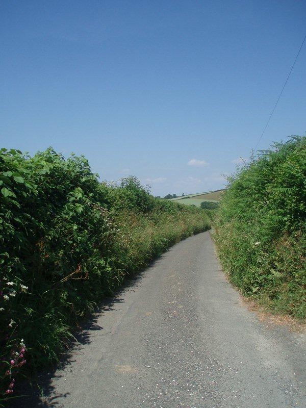 Hedge lane 1