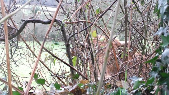 Hedge layer 2
