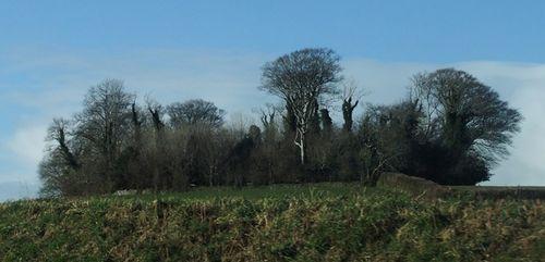 Storm-damaged woodland 25 years on