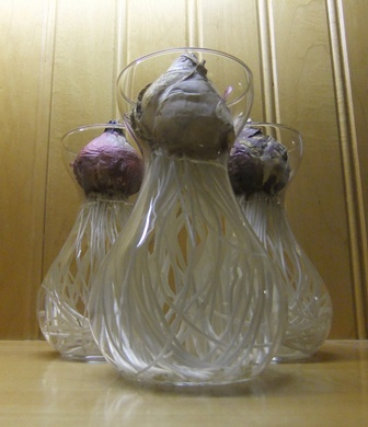 Bulbs glass 1