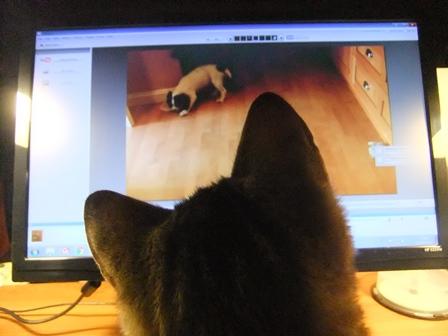 Magnus & the screen