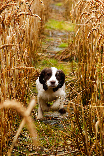 Nell in the wheat