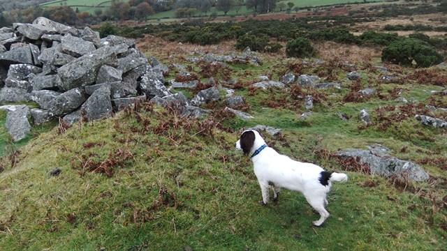 Nell meets Dartmoor
