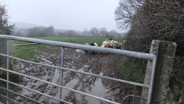 Mud walk sheep gate