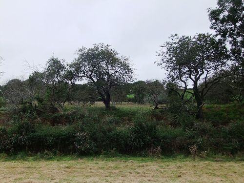 Tamar Valley orchard