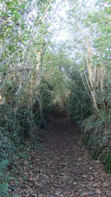 Nell and the green lane