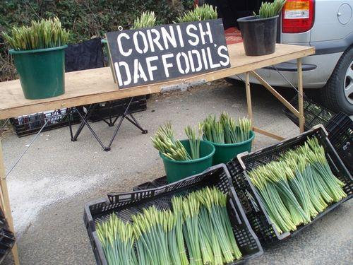 Cornish daffs