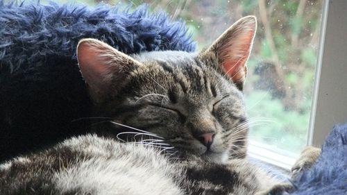 Magnus sleeps more 2