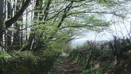 Btb rogation  walk 067 woods green 2