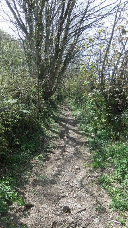 Btb rogation  walk 059 green lane