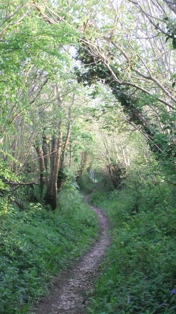Holloway in May ~ Tamar Valley